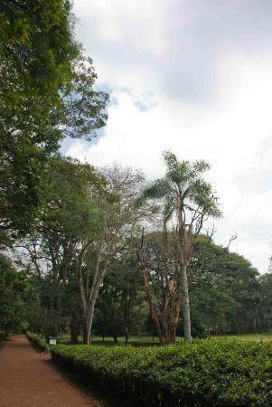 Nairobi Arboretum : A well maintained park