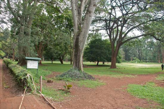 Nairobi Arboretum: Walking into the open park