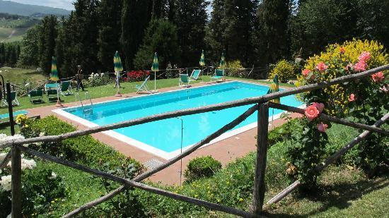 Fattoria Poggio Alloro: pool area