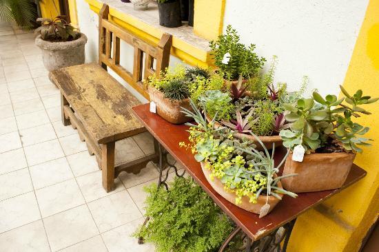 Cafe Mejico de Antaño : Venta de Plantas de Ornato
