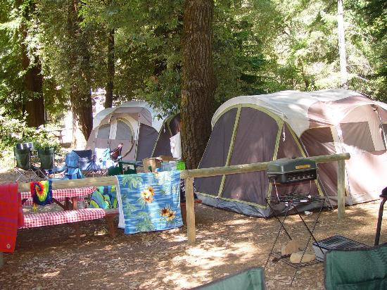 Redwoods River Resort & Campground: View of tents looking from RV site
