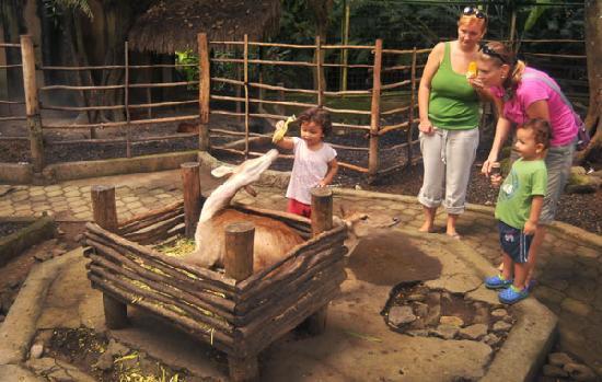 Sukawati, Indonesia: Rusa, kijang dan kancil