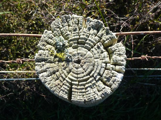 Boutique Horsetreks Day Tours: fence post