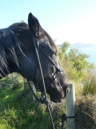 Boutique Horsetreks Day Tours: onyx with her rope halter