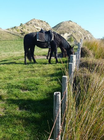 Boutique Horsetreks Day Tours: horses wait