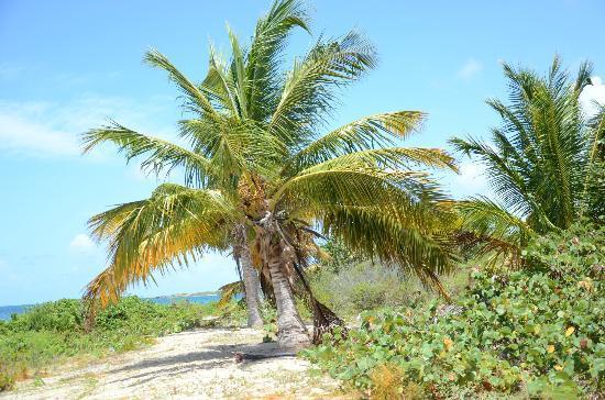 Blue Beach : palms