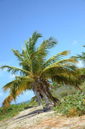 Blue Beach : palm trees