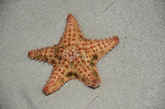 Blue Beach: starfish