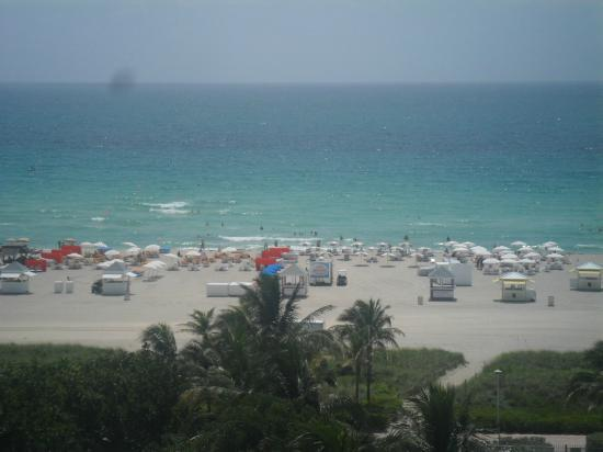 Shore Club South Beach Hotel: Gorgeous view during the day