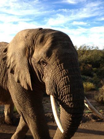 Sanbona Wildlife Reserve - Tilney Manor, Dwyka Tented Lodge, Gondwana Lodge: iPhone pic - up close