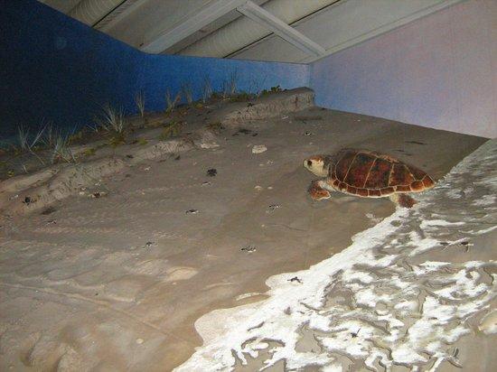 Queensland Museum South Bank: Maquette de la mer de corail