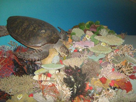 Queensland Museum South Bank: Maquette mer de corail