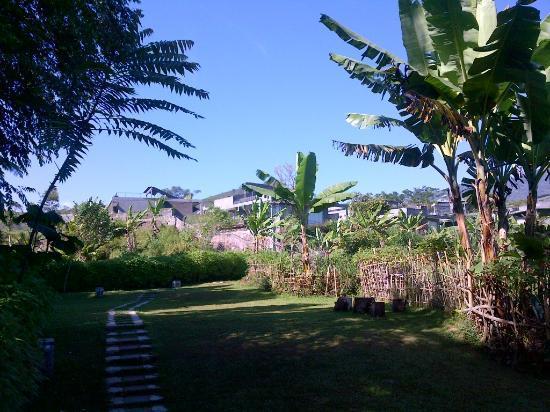 Tea Garden Resort Bandung: scenery