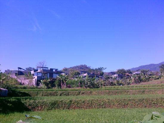 Tea Garden Resort Bandung : scenery