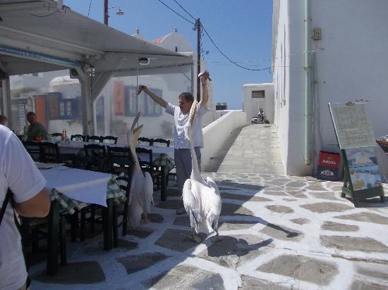 Paraportiani Taverna : Momento del pasto della mascotte Petros