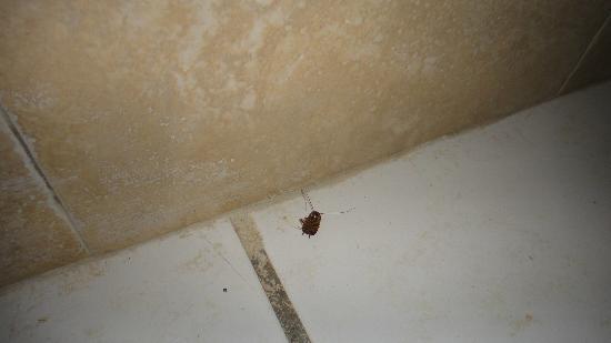Rainforest Ocean View Inn: cucaracha en el baño, tan pronto nos entregaron la habitación