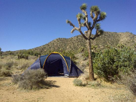 Black Rock Campground : Under the shade of a Joshua Tree