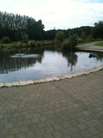 Tymon花园