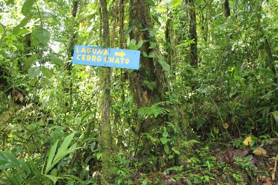 Cerro Chato ANC Park & Gardens: Signs in the forest.  The hike is well marked.  You won't need a guide/map.