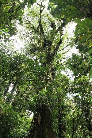 เซอร์โรชาโตเอเอ็นซีปาร์คแอนด์การ์เดน: Forest.