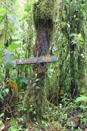 Parque y Jardines de Cerro Chato ANC: Forest.