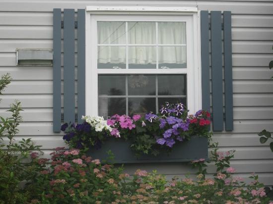 Bonshaw Breezes Bed and Breakfast: Beautiful flower box