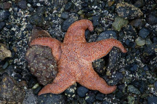 Batstar Adventure Day Tours: Starfish