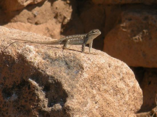 Puye Cliff Dwellings: Cute visitor to the cliffs