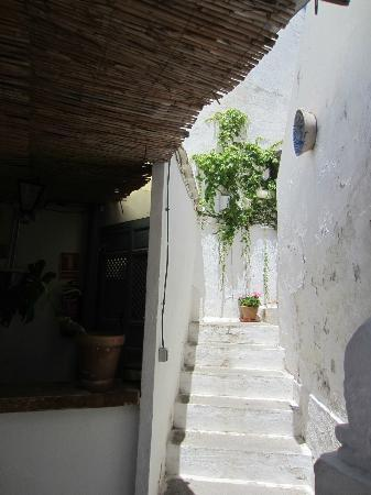 Escuela Carmen de las Cuevas: A staircase leading up from the first terrace. Gorgeous plants and flowers everywhere!