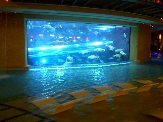 Do Golden Nugget Shark Tank Tours Book Up