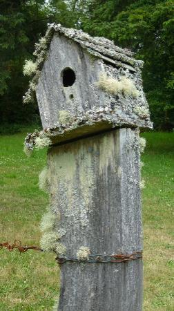 Westport Bayside Bed & Breakfast: Adorable birdhouses sit atop the fence posts!!!