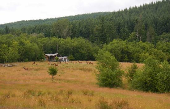 Mount St. Helens Adventures Tours Eco-Park and Tent & Breakfast : family of Elks in park grounds!