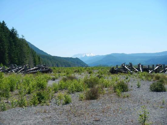 Mount St. Helens Adventures Tours Eco-Park and Tent & Breakfast : Mt. St Helens in distance