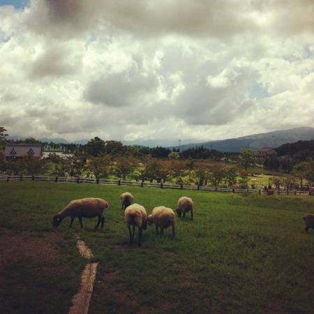 Bokka no Sato: 牧場です