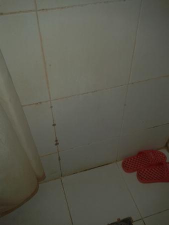Tang Yue Hotel : La muffa è ben evidente tra le piastrelle del bagno