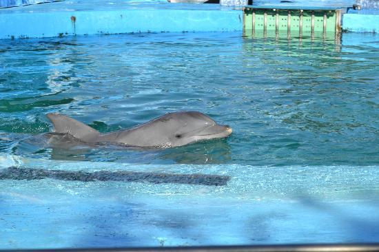 Delfin Clementina, Parque Mundo Marino