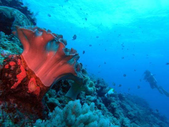 Layang Layang Island Resort: reef