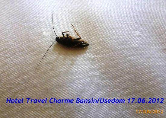 """Travel Charme Strandhotel Bansin: Das Bild zeigt die """"Beilage"""" auf dem Nebenbett am Morgen des 17.06.2012"""