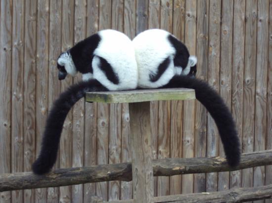 Canterbury, UK: Howletts Wild Animal Park