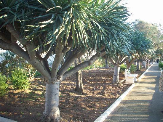 Hotel Phoenicia: Gardens