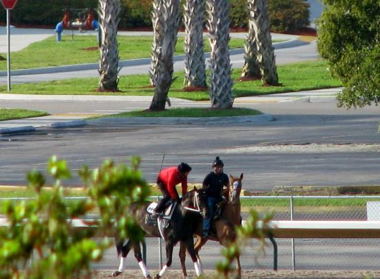 Stadium Hotel: Horse work out in the morning