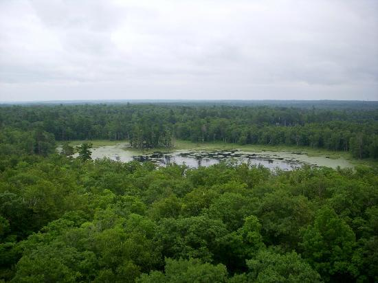 Douglas Lodge : View from Fire Tower