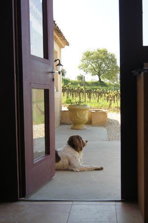 Provence Wine Tours : Beautiful Winery Scenery