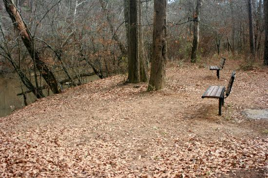 Little River Trail: Benches