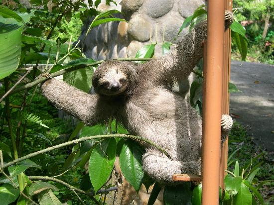 Tree Houses Hotel Costa Rica: Sloth on front gate