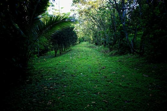 Tree Houses Hotel Costa Rica: Path to River