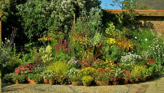 Exotic pot plants in the courtyard garden - Picture of Great Dixter ...