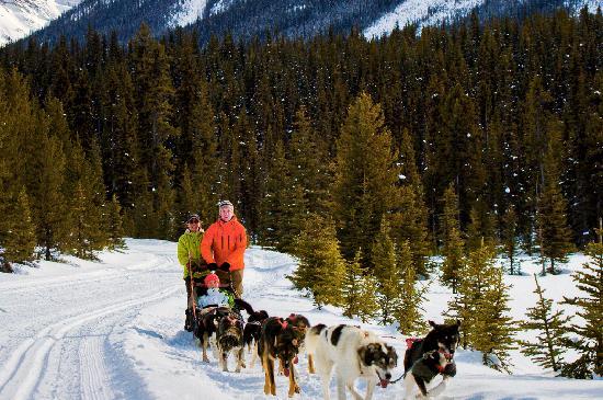 Lake Louise, Canada: Dogsledding