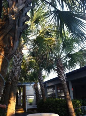 Sea Witch Cafe : our table's view. so pretty with palm trees over head
