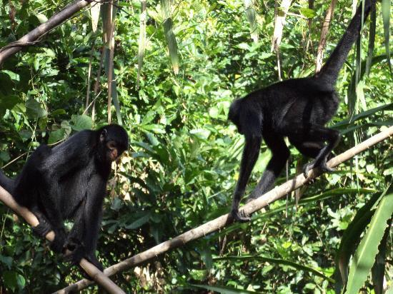 Ecoamazonia Lodge: Nearby Monkey Island